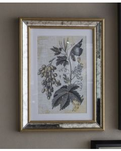 Braun Botanical Artwork - Set of 2