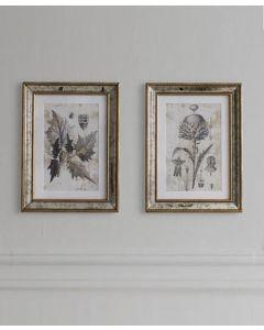 Fremont Botanical Studies Artwork - Set of 2